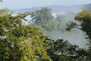Tropical rainforest, Boca Tapada, Costa Rica  -  Roland Seitre