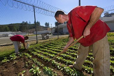 Organic garden tended to by inmates as part of sustainability in prison program, Cedar Creek Corrections Center, Washington  -  Cyril Ruoso