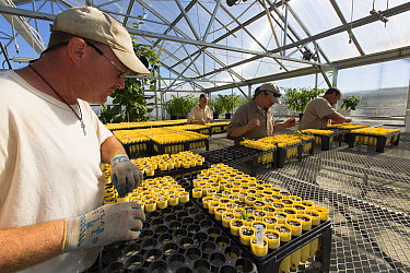 Inmates tending to native prairie plant seedlings as part of sustainability in prison program, Stafford Creek Corrections Center, Washington  -  Cyril Ruoso