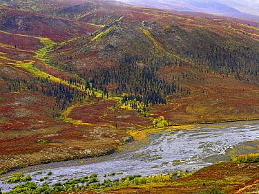 Klondike River, Tombstone Territorial Park, Yukon, Canada  -  Tim Fitzharris