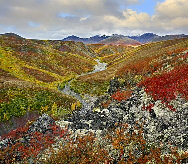River flowing through tundra, Ogilvie Mountains, Tombstone Territorial Park, Yukon, Canada  -  Tim Fitzharris