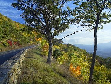 Skyline Drive, Shenandoah National Park, Virginia  -  Tim Fitzharris