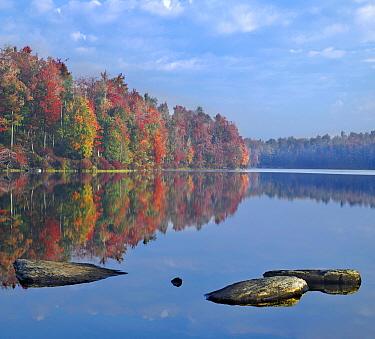 Deciduous forest in autumn along Lake Jean, Ricketts Glen State Park, Pennsylvania  -  Tim Fitzharris
