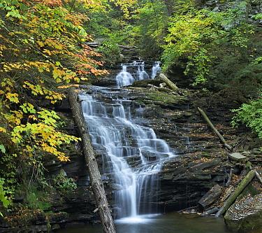 Delaware Falls, Ricketts Glen State Park, Pennsylvania  -  Tim Fitzharris