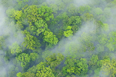 Primary rainforest, eastern Sabah, Borneo, Malaysia  -  Ch'ien Lee