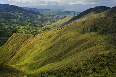 Clear cut mountains, Mount Kiamo, Mindanao Island, Philippines  -  Ch'ien Lee