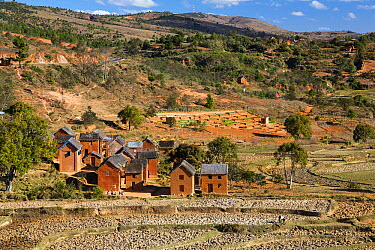 Rice (Oryza sativa) terraces and village in highlands, Madagascar  -  Konrad Wothe