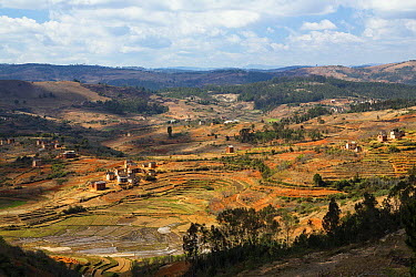 Rice (Oryza sativa) terraces and villages in highlands, Madagascar  -  Konrad Wothe
