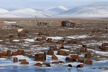Polar Bear (Ursus maritimus) near buildings and abandoned rusting barrels, Wrangel Island, Russia  -  Sergey Gorshkov