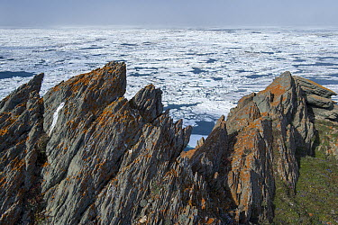 Cliffs above ice floe on ocean, Wrangel Island, Russia  -  Sergey Gorshkov