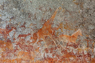 Southern Giraffe (Giraffa giraffa) and other wildlife depicted in San bushman rock paintings, estimated at around 2000 years old, Nswatugi Cave, Matobo National Park, Zimbabwe  -  Michael Durham