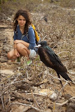 Great Frigatebird (Fregata minor) and tourist, Genovesa Island, Galapagos Islands, Ecuador  -  Michael Durham