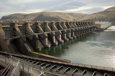 Fish ladders on John Day Dam, Columbia River, Oregon  -  Michael Durham