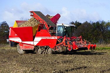 Sugar Beet (Beta vulgaris) harvesting machine, Denmark  -  Duncan Usher