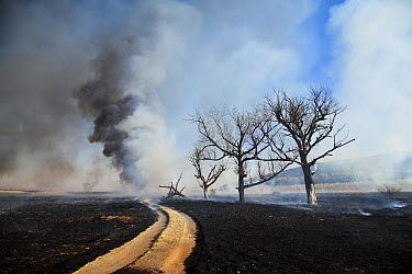 Wildfire damage around a road, Marievale Bird Sanctuary, South Africa  -  Richard Du Toit