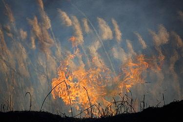 Wildfire, Marievale Bird Sanctuary, South Africa  -  Richard Du Toit