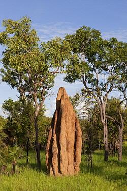 Cathedral termite mound, Litchfield National Park, Northern Territory, Australia  -  Ingo Arndt