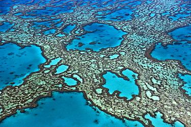 Coral formations on Hardy Reef, Great Barrier Reef, Queensland, Australia  -  Ingo Arndt