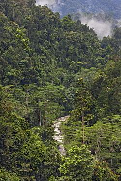 River through primary rainforest, Arfak Mountains, Papua New Guinea, Indonesia  -  Ingo Arndt