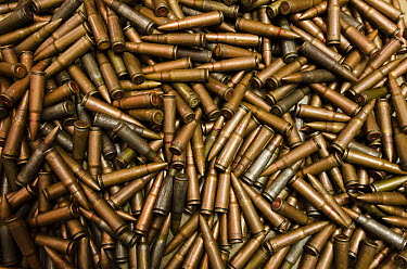 Confiscated and decommissioned poacher's bullets at park headquarters, Odzala-Kokoua National Park, Democratic Republic of the Congo  -  Pete Oxford