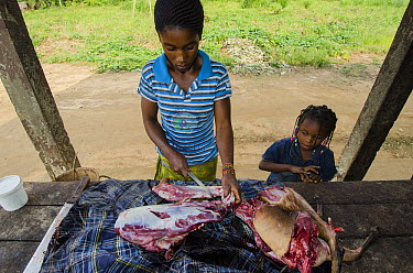 Black-fronted Duiker (Cephalophus nigrifrons) being sold as bushmeat, Democratic Republic of the Congo  -  Pete Oxford