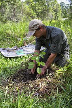 Jono Bateman of the Australian Koala Foundation planting tree for koala habitat, Quinlans Property, Queensland, Australia  -  Suzi Eszterhas