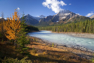 Mount Kerkeslin and Athabaska River, Canadian Rockies, Jasper National Park, Alberta, Canada  -  Matthias Breiter