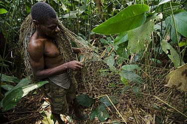 Ba'Kola Pygmy preparing duiker hunting nets, Odzala-Kokoua National Park, Democratic Republic of the Congo  -  Pete Oxford