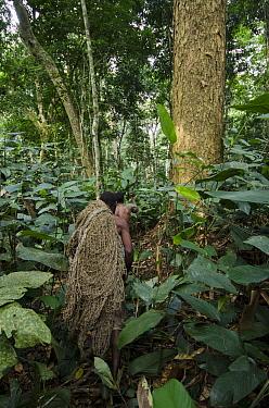 Ba'Kola Pygmy men carrying duiker hunting nets, Odzala-Kokoua National Park, Democratic Republic of the Congo  -  Pete Oxford