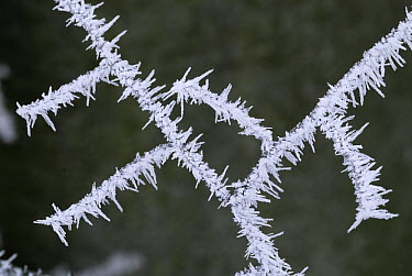 Twig covered in frost, Switzerland  -  Thomas Marent