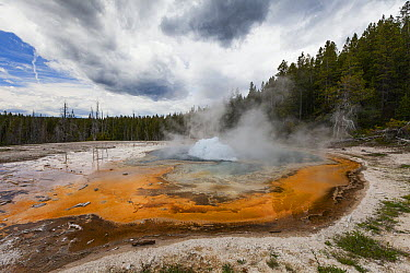 Solitary Geyser, on the eastern trail to Observation Point, Old Faithful Geyser Basin, Yellowstone National Park, Wyoming  -  Duncan Usher