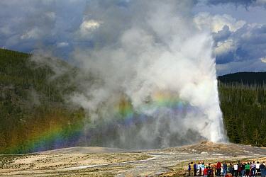 Old Faithful erupting, Yellowstone National Park, Wyoming  -  Duncan Usher