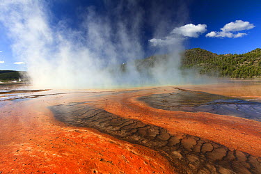 Thermophile bacterial mats and steam rising from Grand Prismatic Spring, Midway Geyser Basin, Yellowstone National Park, Wyoming  -  Duncan Usher