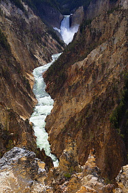 Lower Falls and Grand Canyon of Yellowstone, Yellowstone National Park, Wyoming  -  Duncan Usher
