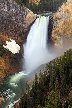 Lower Falls, Grand Canyon of Yellowstone, Yellowstone National Park, Wyoming  -  Duncan Usher