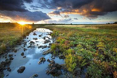 Dudzeelse polder near Zeebrugge at sunset, Belgium  -  Wouter Pattyn/ Buiten-beeld