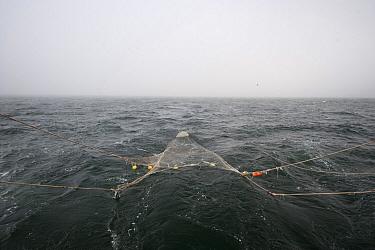 Trawling fishing boat deploying net into North Sea, Belgium  -  Karl Van Ginderdeuren/ Buiten-be