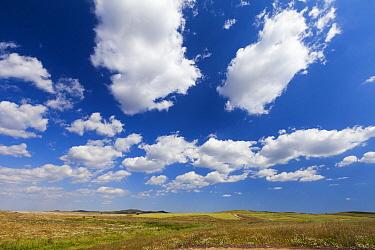 Pastures, Alentejo, Portugal  -  Duncan Usher