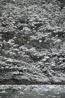 Spring snowfall on sheer cliff, Garibaldi Fjord, Tierra del Fuego, Chile  -  Kevin Schafer