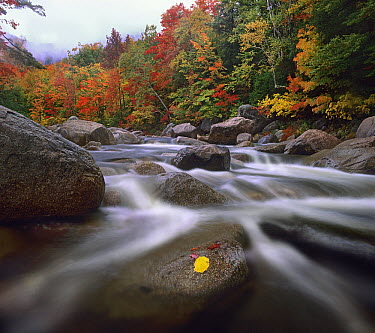 Swift River, White Mountain National Forest, New Hampshire  -  Tim Fitzharris