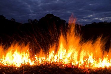 Savanna wildfire, which keeps the forest from taking over, Lope National Park, Gabon  -  Sebastian Kennerknecht