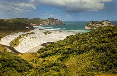 Windblown trees and sand dunes, Wharariki Beach, Archway Islands, Golden Bay, New Zealand  -  Colin Monteath/ Hedgehog House