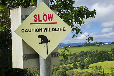 Lumholtz's Tree-Kangaroo (Dendrolagus lumholtzi) roadkill prevention sign, Atherton Tableland, Queensland, Australia  -  D. Parer & E. Parer-Cook