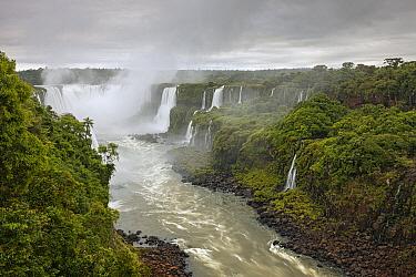 Iguacu Falls, the world's largest waterfalls, Iguacu National Park, Brazil  -  Ingo Arndt