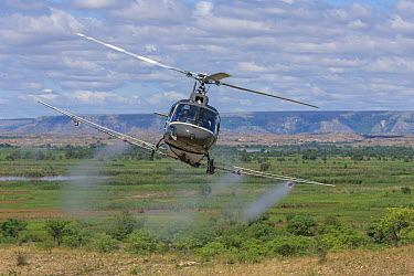 Migratory Locust (Locusta migratoria) control operation with insecticide delivery by FAO helicopter, Miandrivazo, Madagascar  -  Ingo Arndt