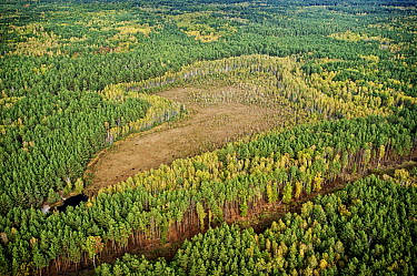 Aerial view of bog in taiga within the bounds of the 30 km Chernobyl Exclusion Zone, Ukraine  -  James Christensen