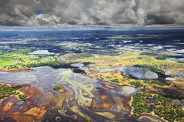 Flooded fields, wet season, Pantanal, Brazil  -  Luciano Candisani