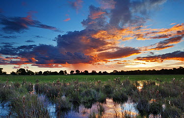 Sunset and rain in permanent lake in the  wetland, Pantanal, Brazil  -  Luciano Candisani