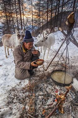 Caribou (Rangifer tarandus) watching a Tsataan elder brewing tea over wood fire at camp, Hunkher Mountains, Mongolia  -  Colin Monteath/ Hedgehog House