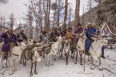 Caribou (Rangifer tarandus) and Tsataan herders at winter camp, Hunkher Mountains, Mongolia  -  Colin Monteath/ Hedgehog House